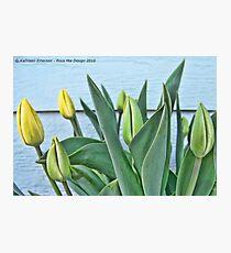 Yellow Buds Photographic Print