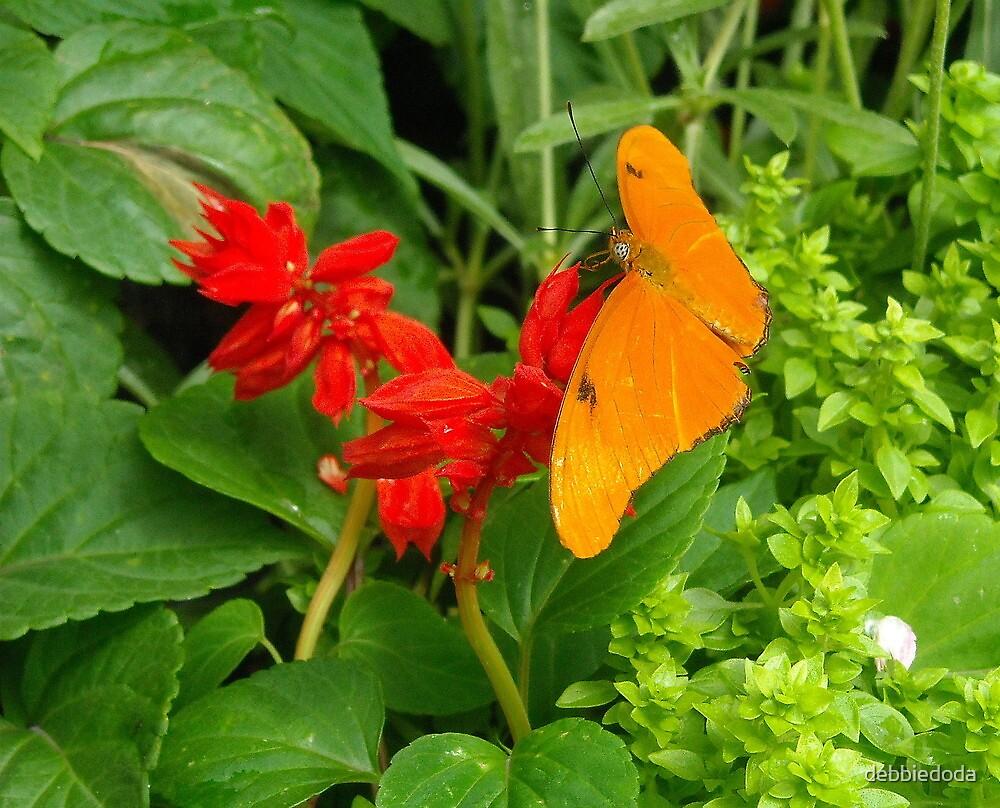 Butterfly at Krohn Conservatory, Cincinnati by debbiedoda