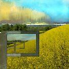 Sun Drenched Fields  by Elizabeth Bravo