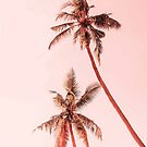 Sunset palms by Gale Switzer