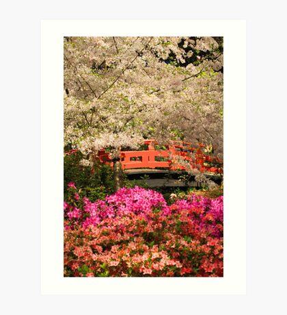 Red Bridge And Blossoms Art Print
