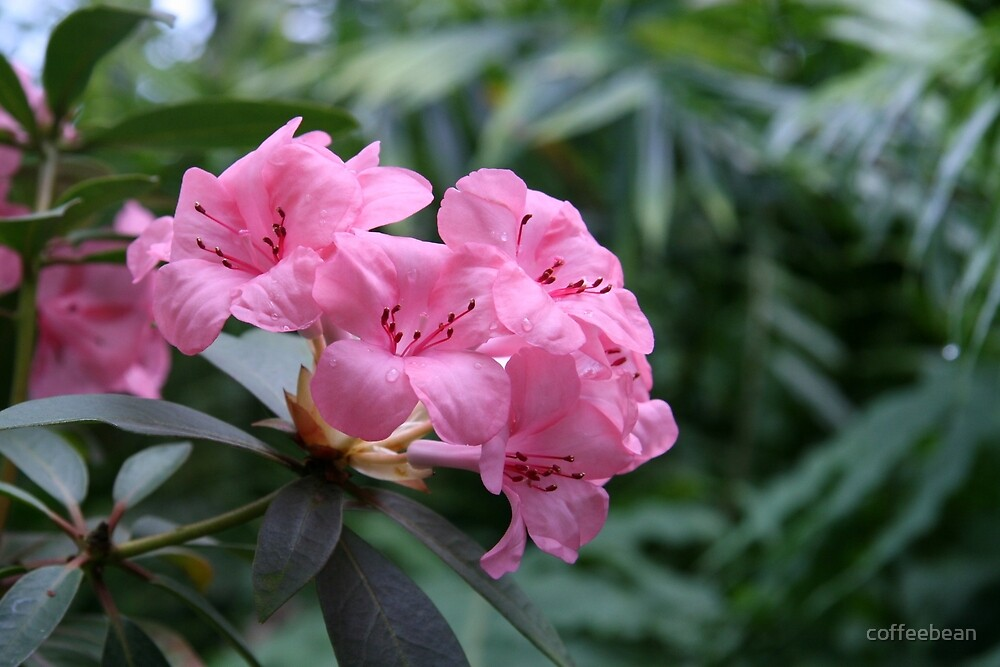 Jungle Pink by coffeebean