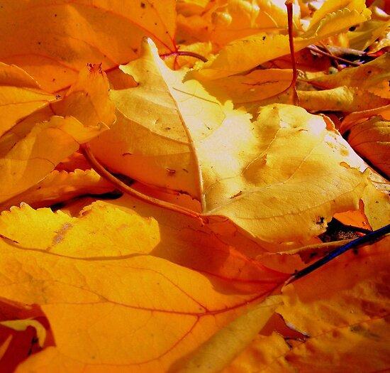 Vibrant Winter #1 by Elizabeth Rose Rawlings