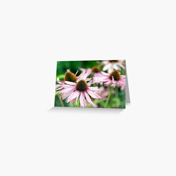 An English Country Garden In Summertime Greeting Card