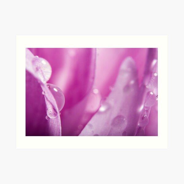 Droplets on Purple Petals Art Print