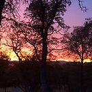 Sunset on the Ranch by marcy413