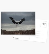 Spread your wings and land  Postcards