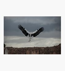 Spread your wings and land  Photographic Print