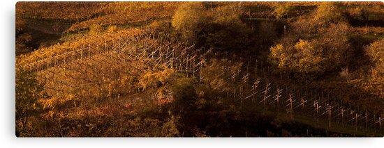 Uphill and down, Bolzano-Bozen, Italy, 2009 by Chris Culy