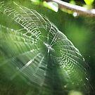 Spiderweb by Sangeeta