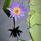 Flower in Bangkok by laurentlesax