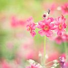 ~summer lovin' by TeresaMurphy