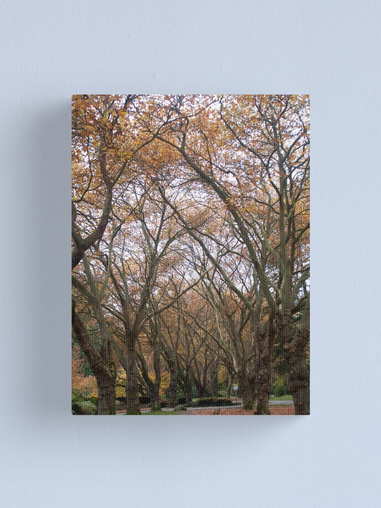 Alternate view of Faded canopy, Vancouver, Canada, 2007 Canvas Print