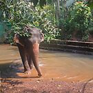 Indian elephant by Svetlana Korneliuk