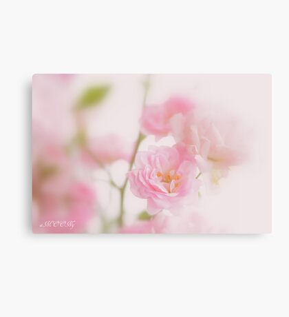 Rose collection 3 Canvas Print