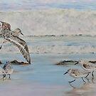 Sanderlings by Mike Paget