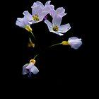 «Flor de cuco» de Photography  by Mathilde