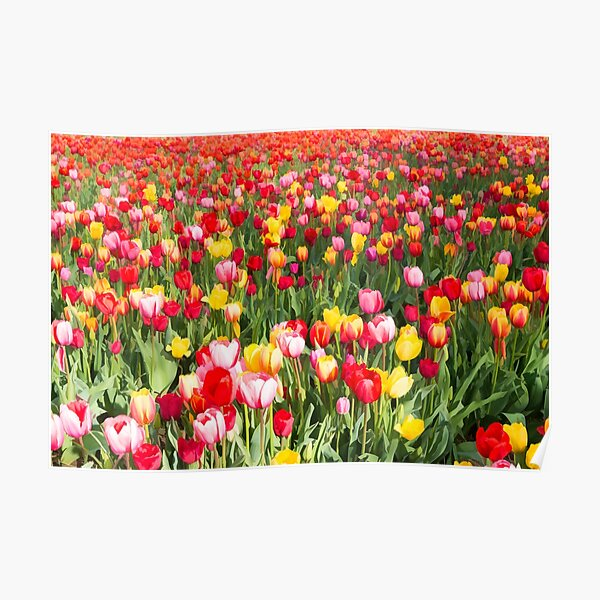 Tiptoeing through the tulip field Poster