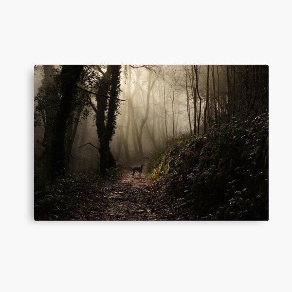 Lurcher in the mist Canvas Print