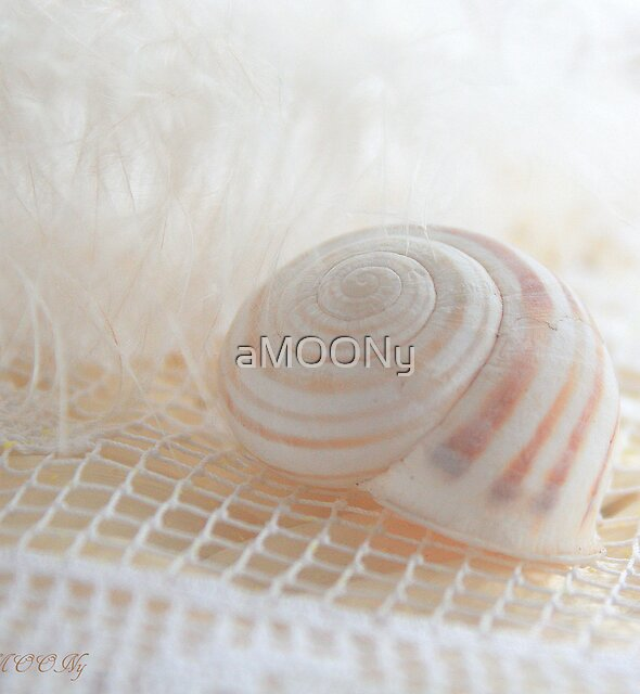 Seashell 1 by aMOONy
