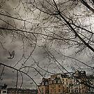 Pigeon over Pont neuf by laurentlesax