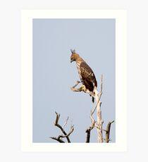 Changeable Hawk Art Print