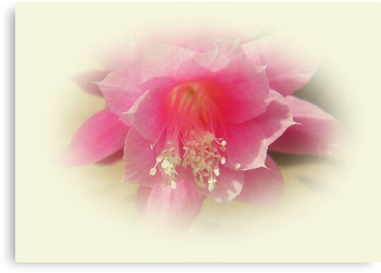 Pretty in Pink by sarnia2