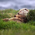 Shetland by Gary Buchan
