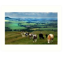 Cattle on the South Downs Art Print