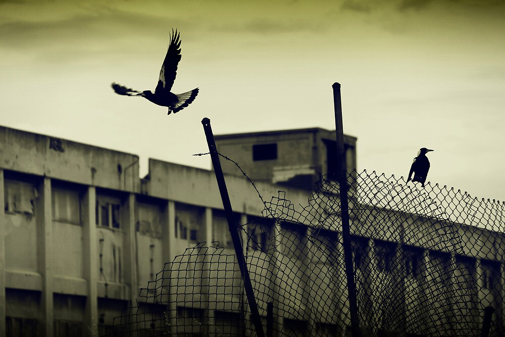 Magpies - Fremantle Power Station by Boxx