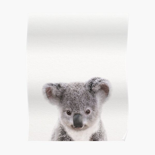 Baby Koala, Baby Animals Art Print by Synplus Poster