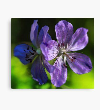 -The Wild Geranium Canvas Print