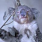 Koala by Alex Preiss