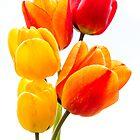 «5 tulipanes» de JEZ22