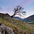 Low Rigg Lone Tree by Phil Buckle