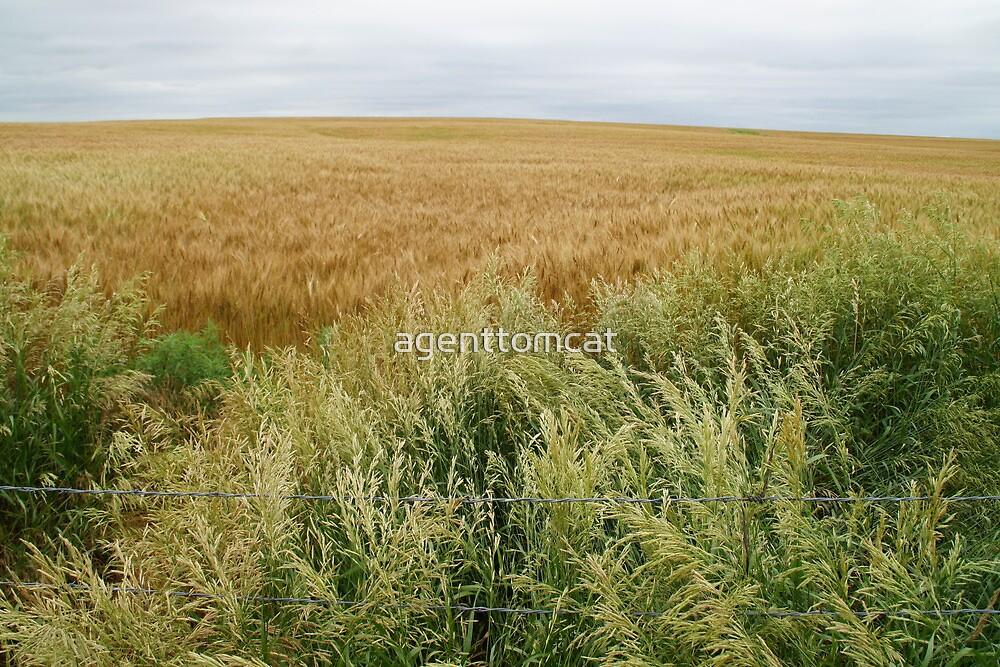 A varied field near Oz. by agenttomcat
