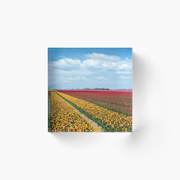 Tulip time in the Netherlands (2) Acrylic Block