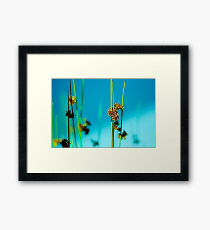 Blue Grass 2 Framed Print