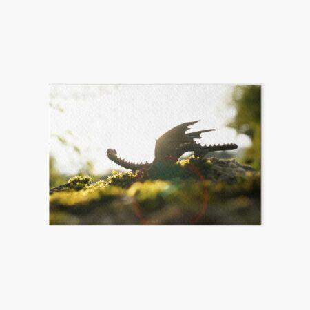 Dragonlet in sunbeam Art Board Print