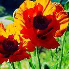 Poppies by MariaVikerkaar