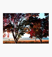 Autumn Sunrise in the Barossa Photographic Print