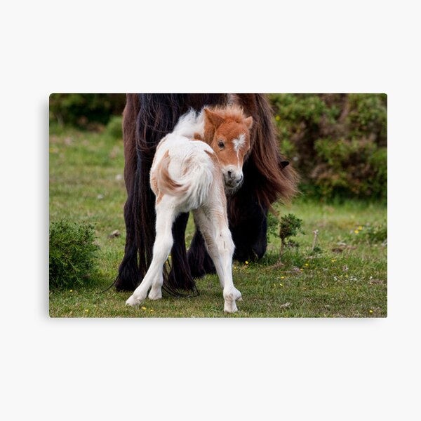 Is this my best side? Canvas Print