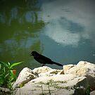 Little bird By The lake by Linda Miller Gesualdo