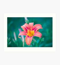 Flower at the end of the driveway Art Print
