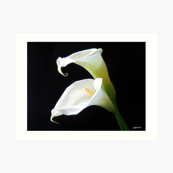 Elegant Calla Lily Flowers 8 Art Print
