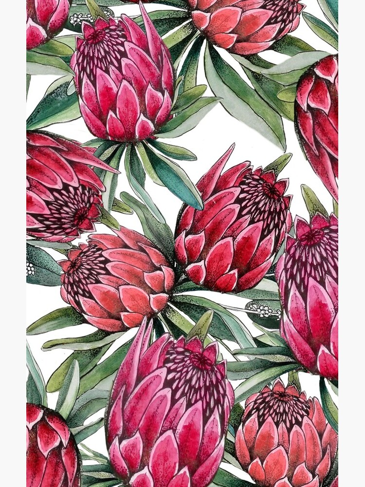 Protea flower Watercolor on white by MagentaRose