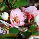 Pink and white by Mattie Bryant