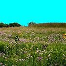 Butterfly Meadow by Larry Trupp