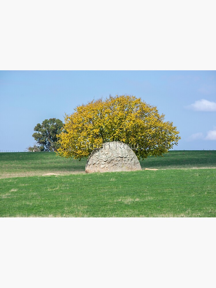 Rock and Tree in Meadow by StuartRow
