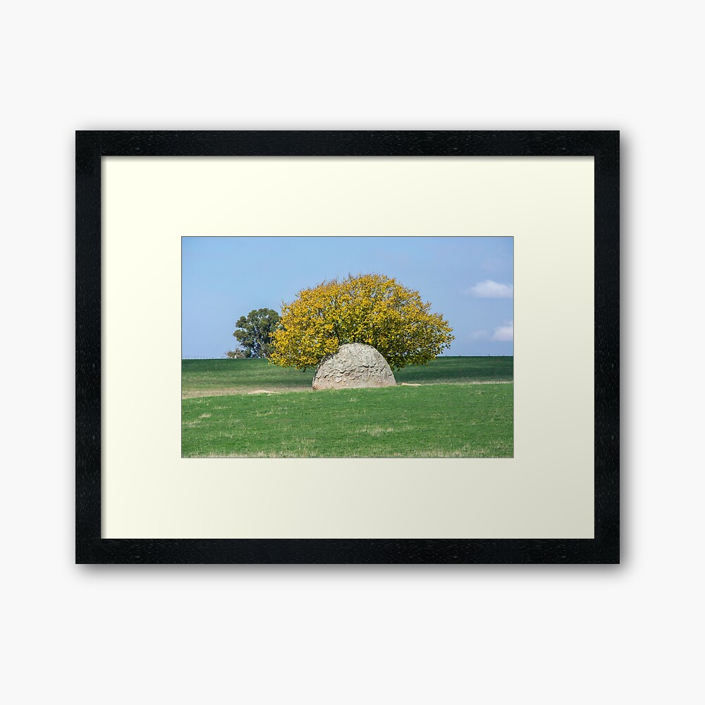 Rock and Tree in Meadow Framed Art Print